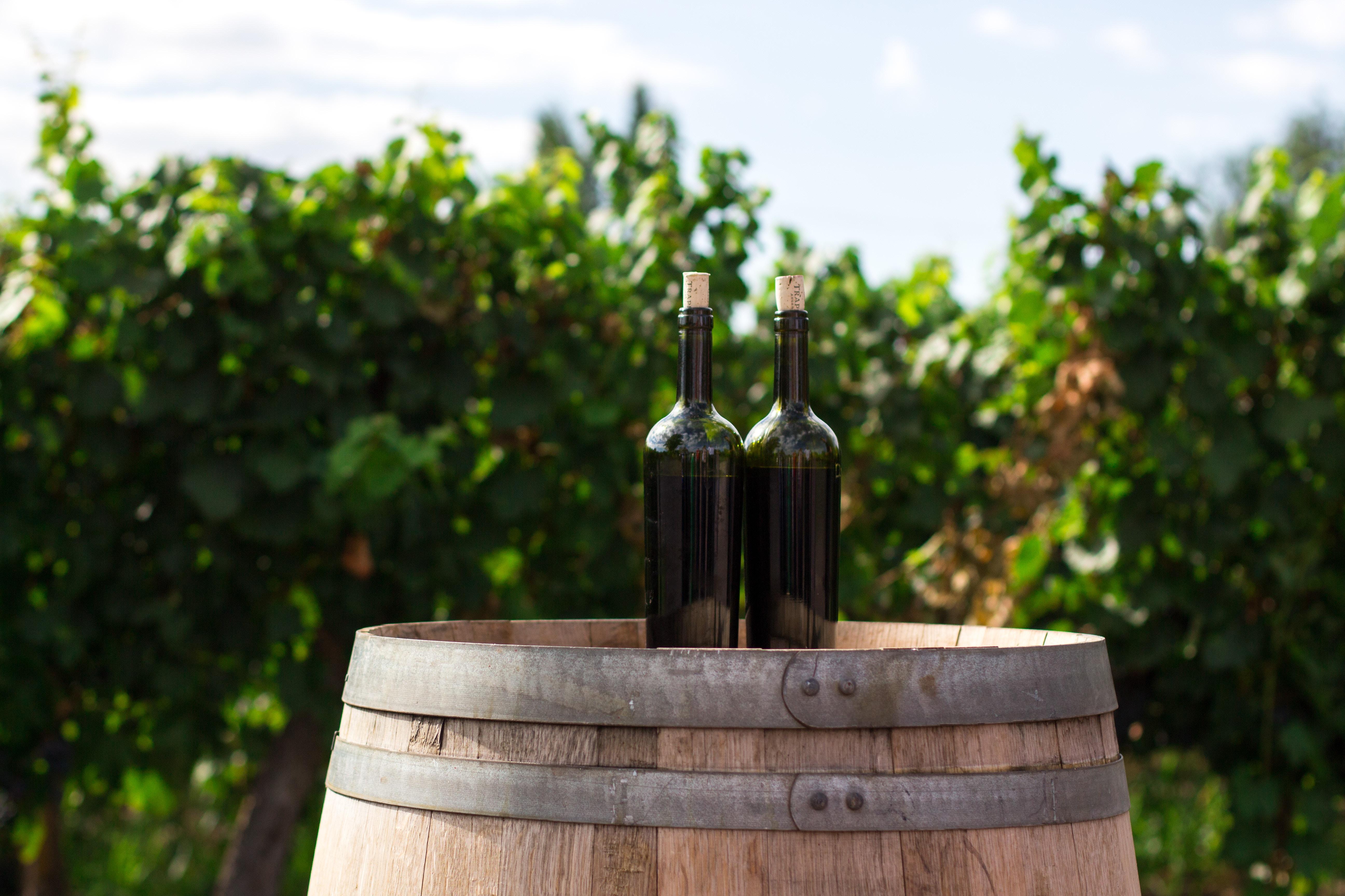 denominazioni dei vini