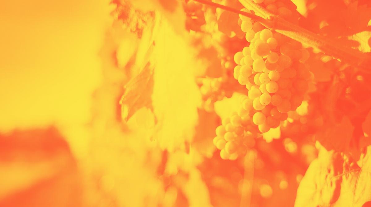 La legislazione del vino in Italia